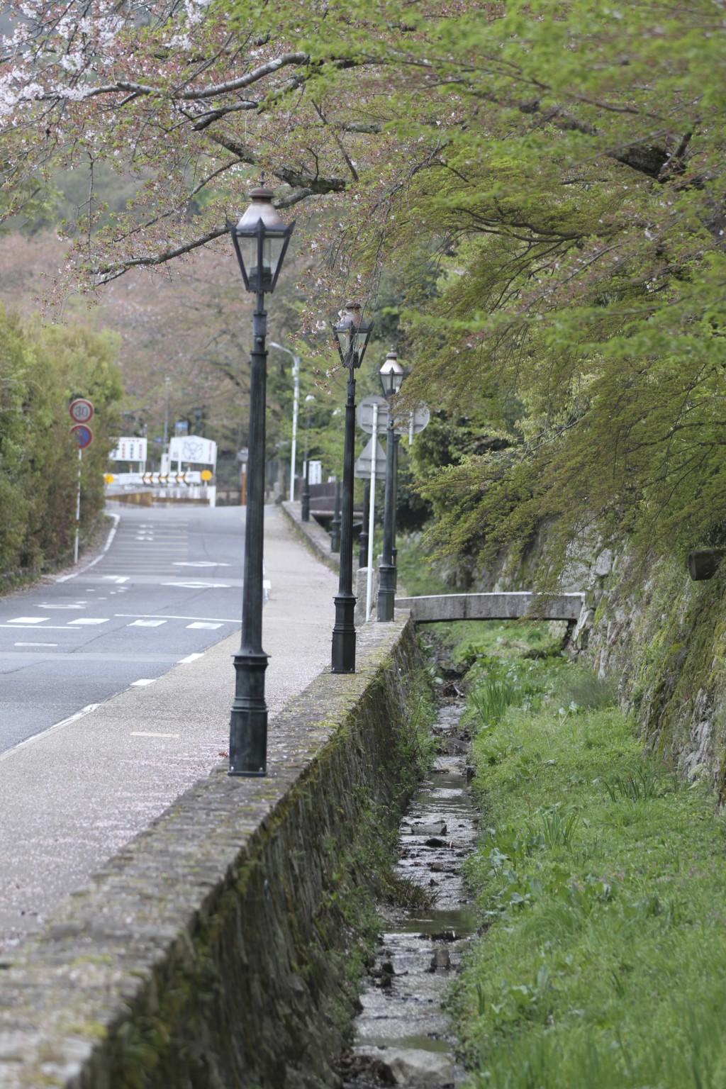 「円満院」横の水路。やはり、ここの桜は終わっていた
