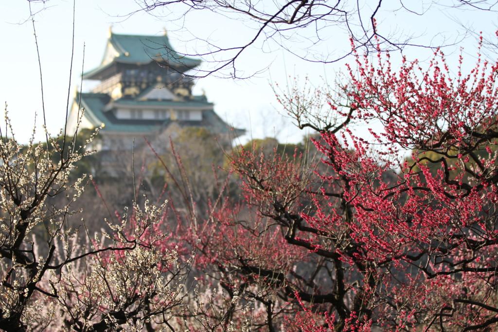 「定番」大阪城へお連れ