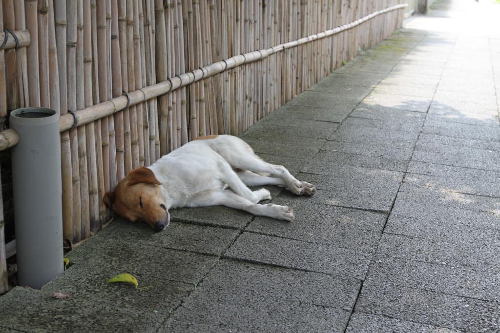 日陰で昼寝をしているワンちゃん