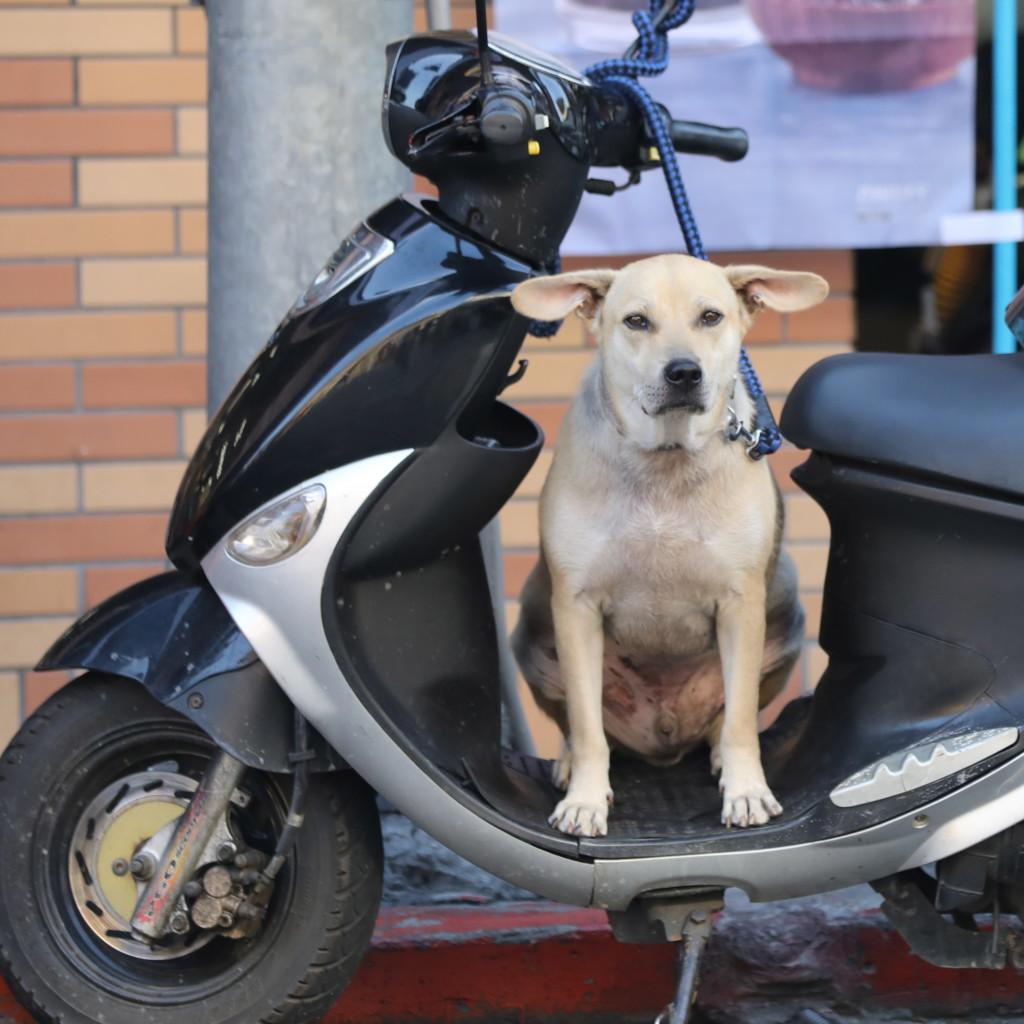 ご主人待ちの「忠犬」