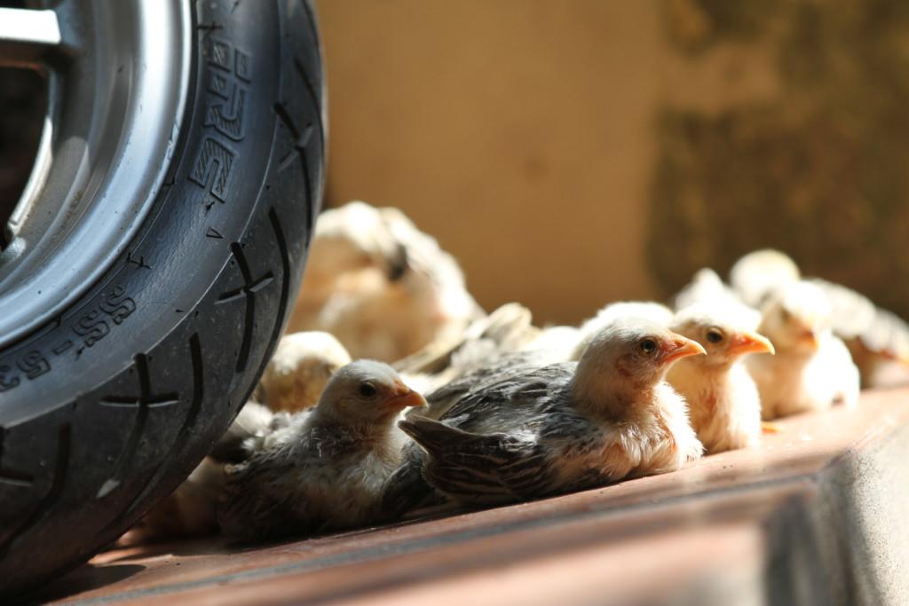 タイヤの影で「一家団らん」