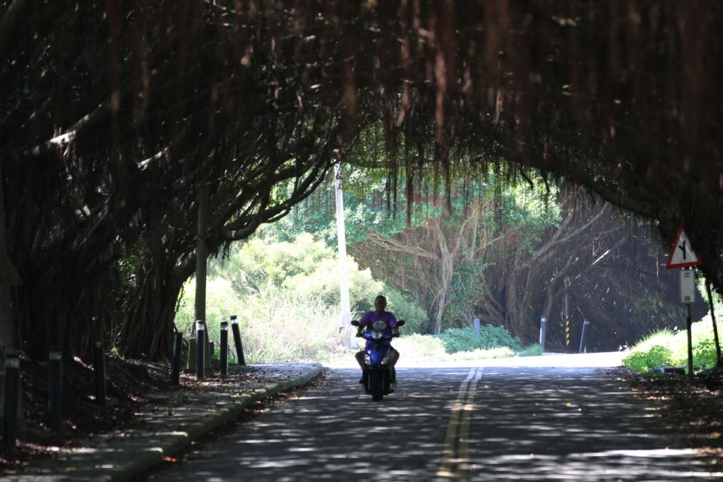 木のトンネル「有容路」(西莒島)