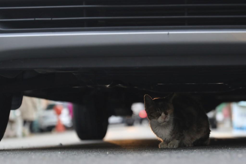 車の下で休むニャンコ