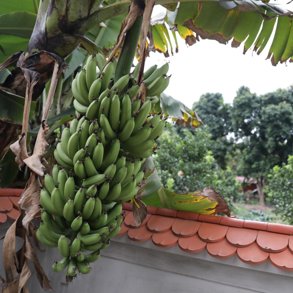 境内にバナナ