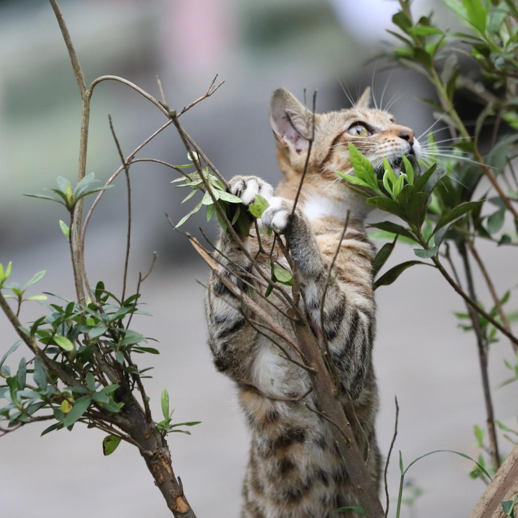 草木で遊ぶ